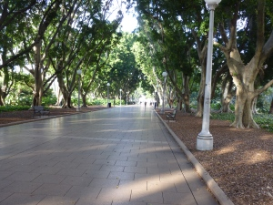Precinct of trees, Hyde Park